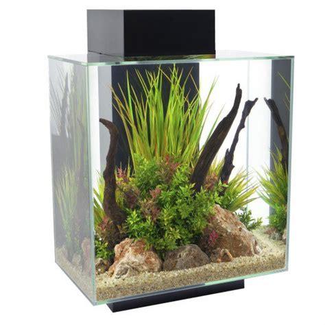 aquarium design edge betta fish tanks how to choose the best aquarium for your