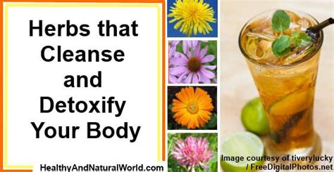 Herbs To Detox Your by Herbs That Cleanse And Detoxify Your