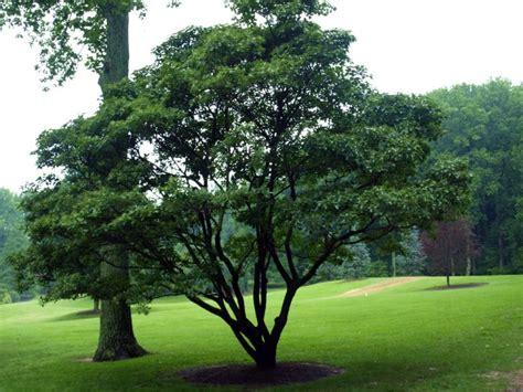 fringetree home garden information center