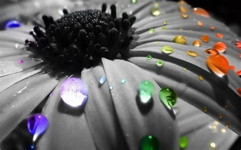 pretty cool raindrops bright colors wallpaper 18125669 fanpop