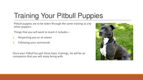 how for a to puppies pitbull puppies how to your pitbull puppy