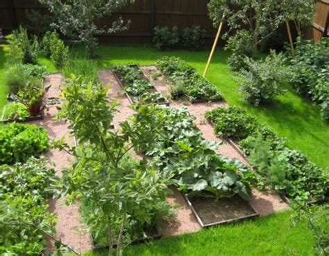 vegetable garden in backyard creating perfect garden designs to beautify backyard