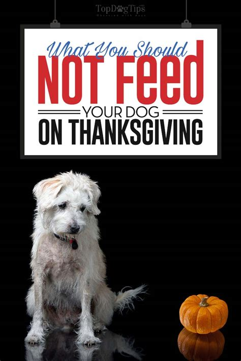 what to feed dogs what not to feed your dogs on thanksgiving when it s