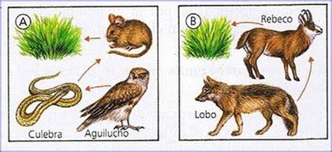 cadenas alimentarias de animales cadenas alimentarias todo sobre animales