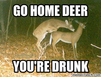 Deer Memes - drunk deer