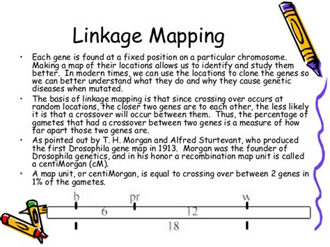 linkage map linkageandcrossingover 101216024248 phpapp01