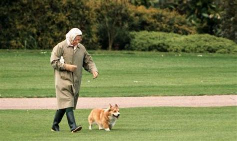 the queen s corgis are you being served how queen makes a royal meal of her