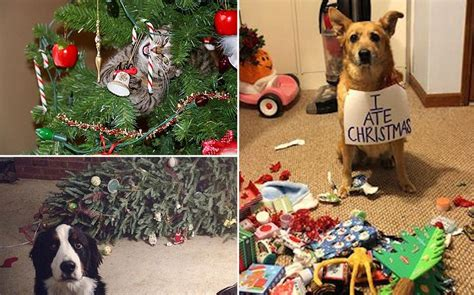 10 hilarious times pets took over christmas quizai