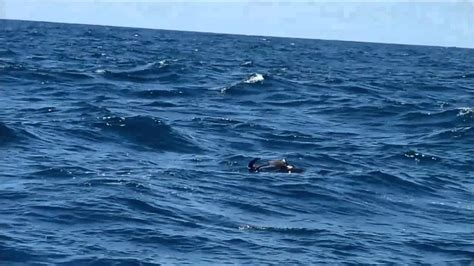imagenes extraordinarias del mar la pesca del perico en el mar peruano regi 243 n sur youtube
