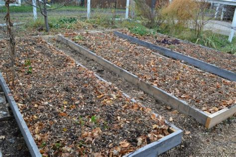 how to prepare garden for winter replace your lawn with food production northern homestead