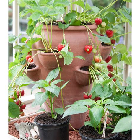 Terracotta Strawberry Planter Pots buy terracotta strawberry planter