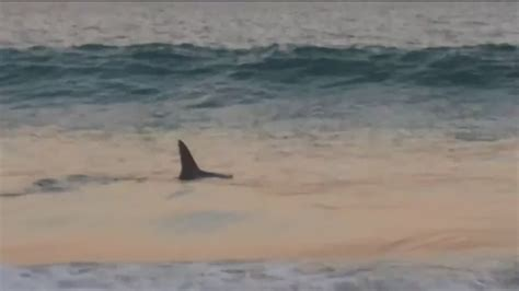 ocean beach ct shark spotted in new london s ocean beach park