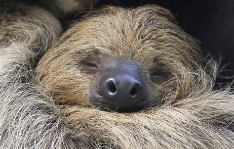 international sloth day  national awareness days  calendar   uk