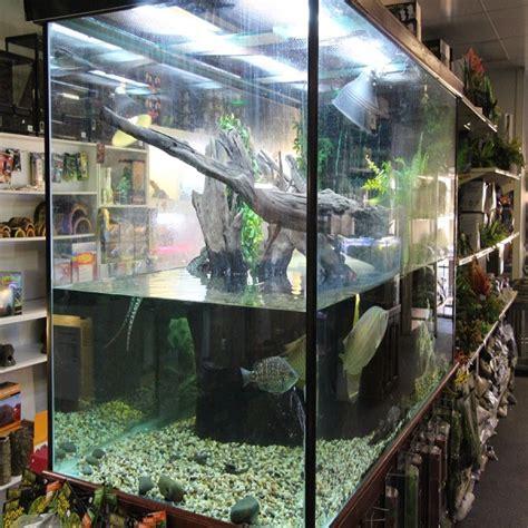 huge range of turtle tanks available amazing amazon