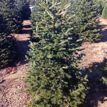henry s christmas tree farm 27 photos 14 reviews