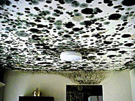 Black Mold Ceiling by Black Mold Ceiling 171 Ceiling Systems