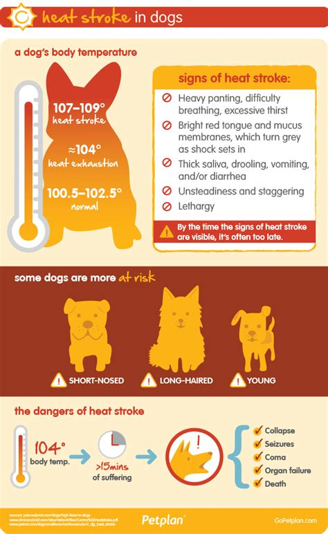 heat stroke in dogs heat stroke in dogs dehydration summer heatwave