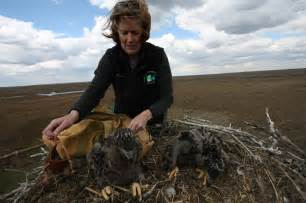 Requirements To Be A Zoologist by Kathy Clark A Zoologist With Ensp Places The Back In The Nest 169 Ben Wurst 171 Conserve