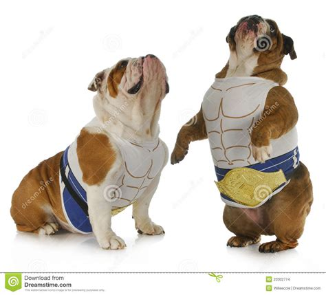 strong dogs strong stock images image 23302774
