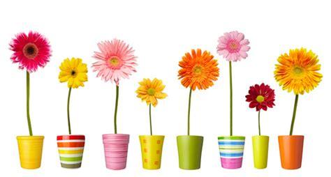 mandare fiori a roma mandare fiori gpsreviewspot
