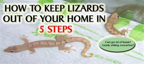 how to get rid of lizards in your house how to get rid of lizards in your house 28 images how to get rid of lizards top 10
