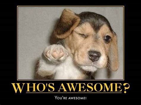 whose awesome you re awesome who s awesome you re awesome newcastle herald