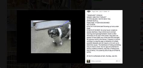 when do shih tzu puppies open their an open letter to the owner who dumped their shih tzu at a high kill shelter in