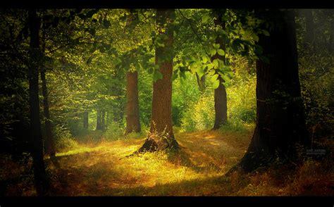 The Light In The Forest by Light In The Forest By Valiunic On Deviantart