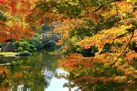the garden of with the fall of fall foliage japanese garden fall colors are about to
