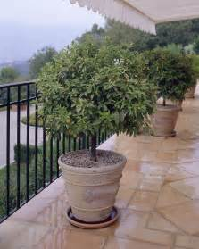 Patio Tree Planters by Patio Trees Everything You Ever Wanted To Know Fast