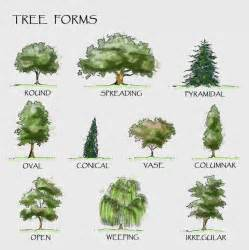 Type Of Trees by Pinterest The World S Catalog Of Ideas