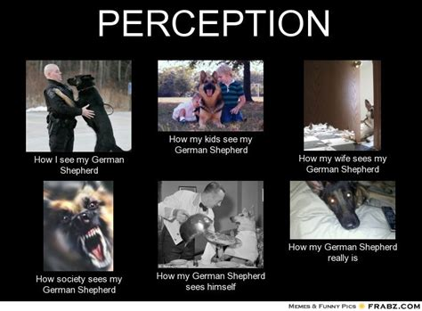 German Memes - german shepherd meme