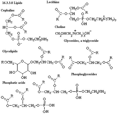 diagram of a lipid trans fatty acid diagram trans free engine image for