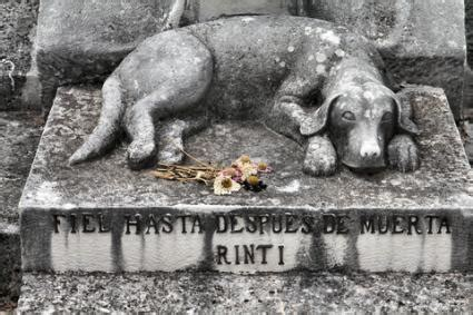 poems about dogs dying poem about the of a lovetoknow