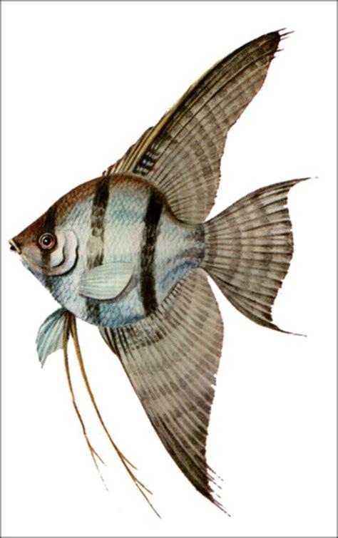Рисунки рыб которые не существуют