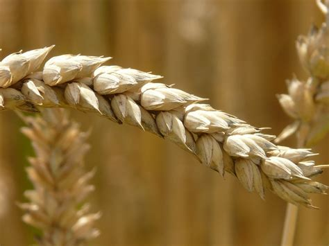 whole grains reduce inflammation treating inflammation with nutrition