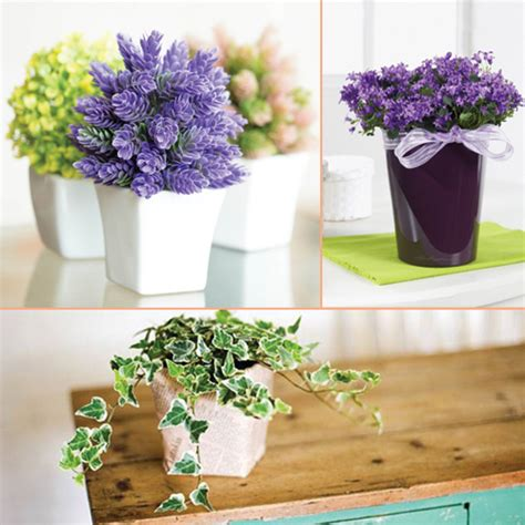 fresh beautiful indoor plant ideas for eco friendly 23201 beautiful houseplants that need very less care slide 1