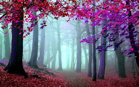 imagenes artisticas en hd wallpapers hd bosques parte 25 im 225 genes taringa