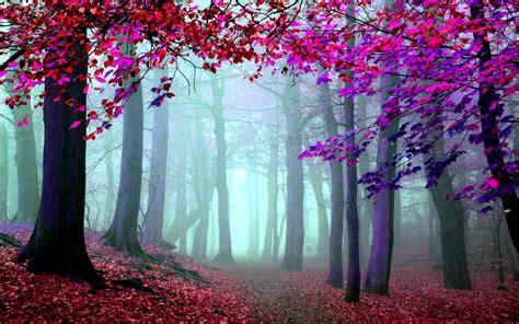 las imagenes artisticas que representan wallpapers hd bosques parte 25 im 225 genes taringa