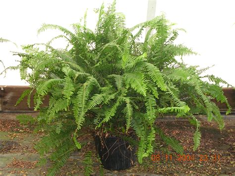plants in the tropical tropical plants