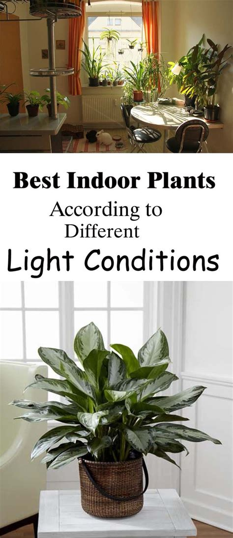 best plants to grow indoors in low light best indoor plants according to different light conditions