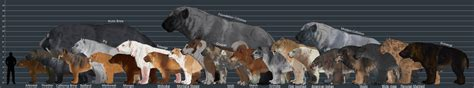 wolf size compared to dire wolf size comparison images