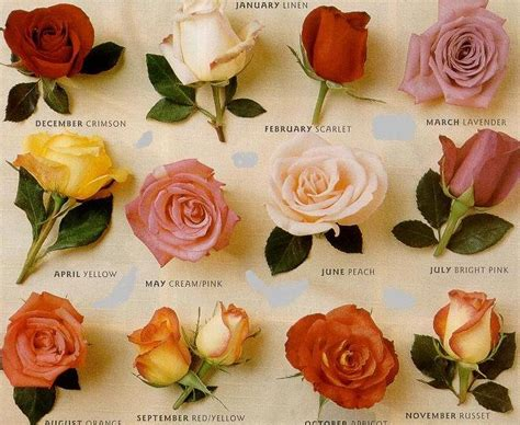 some roses and name on these are the just some of the common names of species