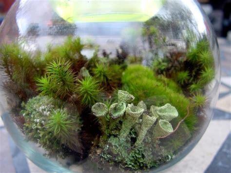 Handmade Terrariums - terrarium kit diy large moss lichen kit featured in 2015