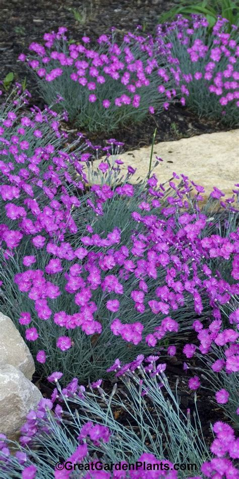 best 25 purple garden ideas on pinterest purple