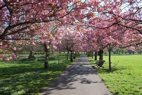 fergus noone gallery greenwich park cherry blossom walk greenwich park