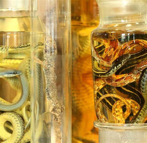 alkohol aufbewahrung schmuggel tierschau im heimischen wohnzimmer bilder