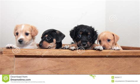 mixed breed puppies for free four mixed breed puppies royalty free stock photography image 35259177