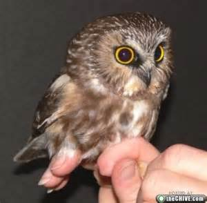 What Are Baby Barn Owls Called 1000 Images About Baby Owls On Pinterest Baby Owls