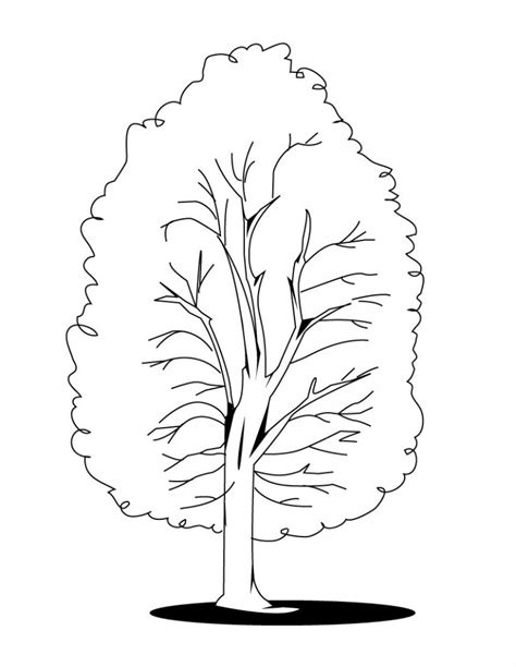 coloring page fall tree free printable tree coloring pages for kids